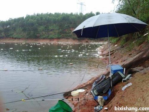 水库湖泊等自然水域钓青鱼的技巧